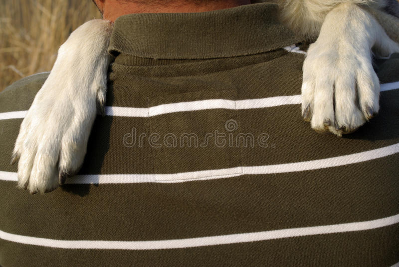 Dog paws royalty free stock photos