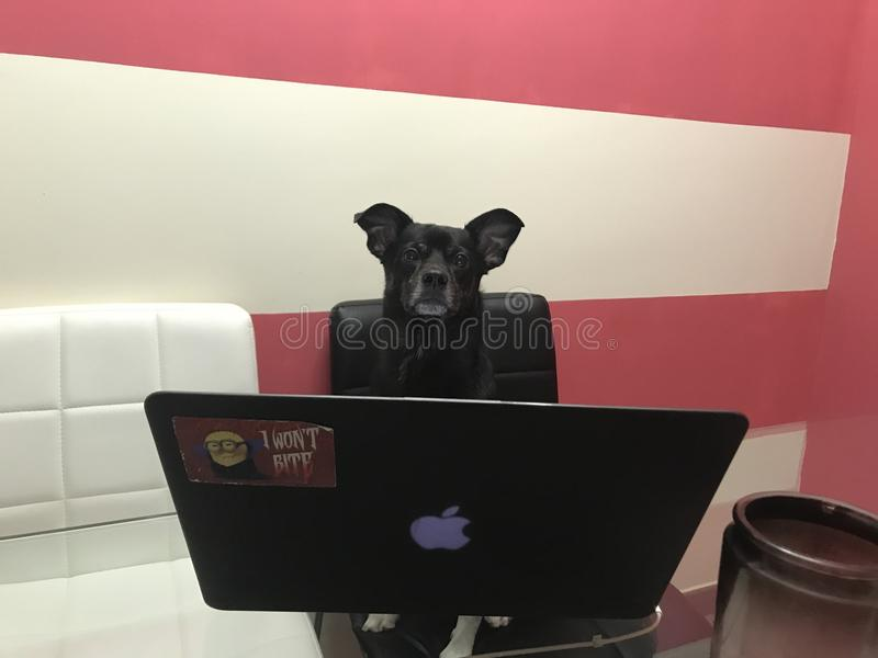 Dog with pc..love. Cute. Home royalty free stock image