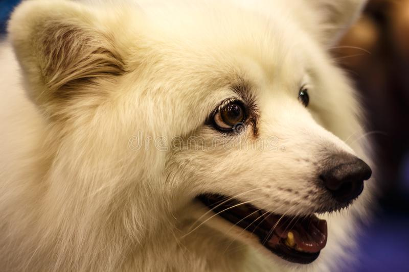 The dog is the pet. Dog is a pet, intelligent and loving owner stock photography