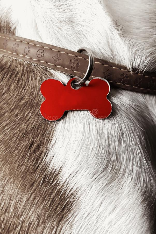 Dog name label concept desatureted. Dog pet name concept on a red metal label on a leather brown leash stock image