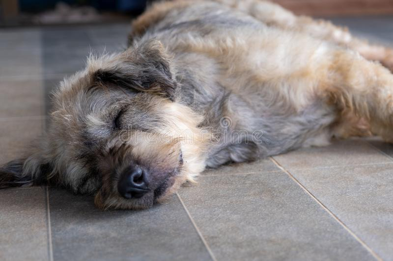 Dog pet sleep lazy lay down canine sit concept royalty free stock photos