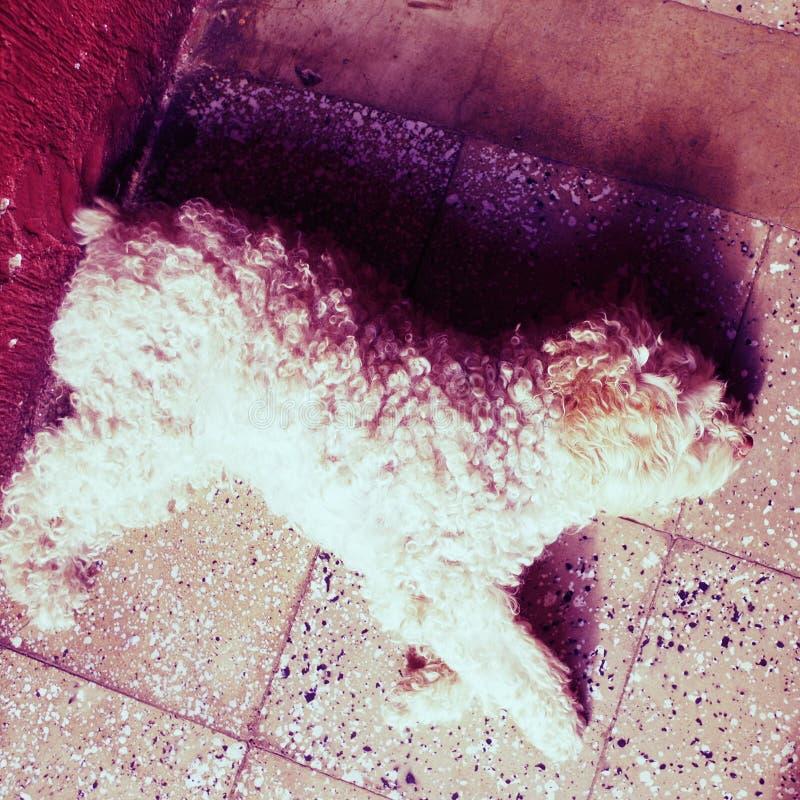 Dog pets royalty free stock image