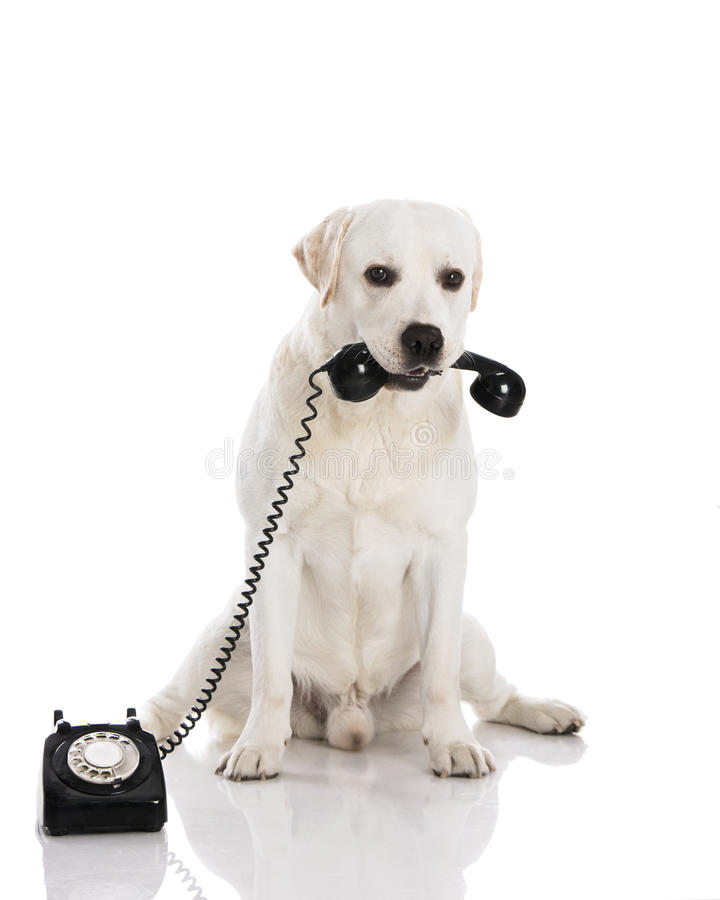 Dog and phone royalty free stock images