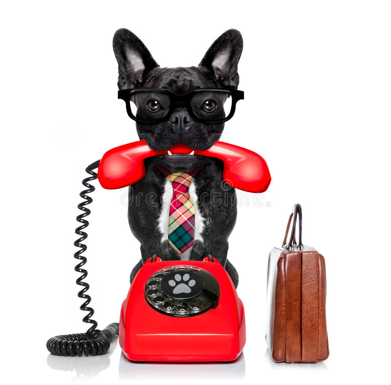 Dog on the phone royalty free stock photography
