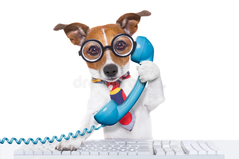 Dog on the phone. Jack russell dog on a call center using the phone or telephone and computer pc keyboard , isolated on white background