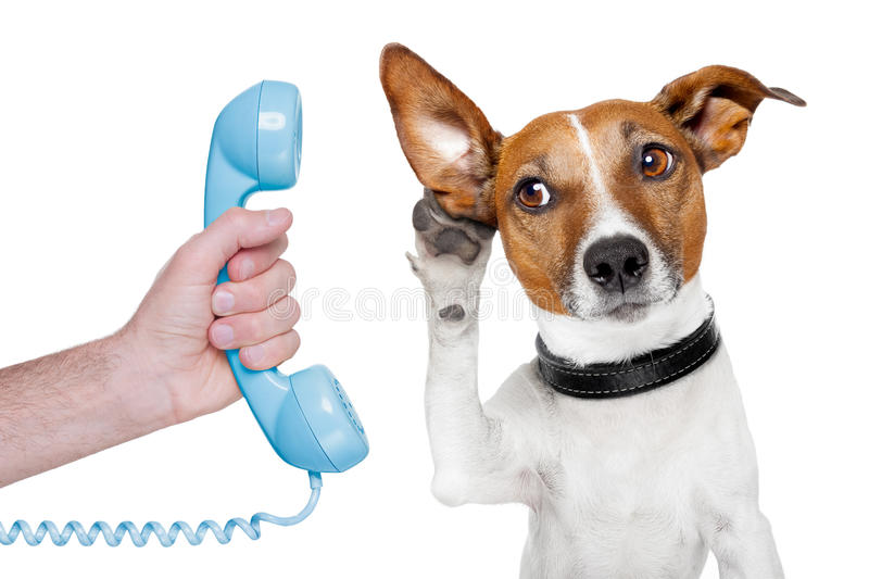 Dog on the phone male hand. Listening carefully