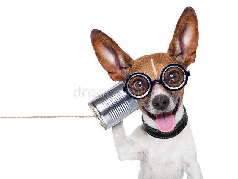 Dog on the phone. Silly ugly dog on the phone with a can