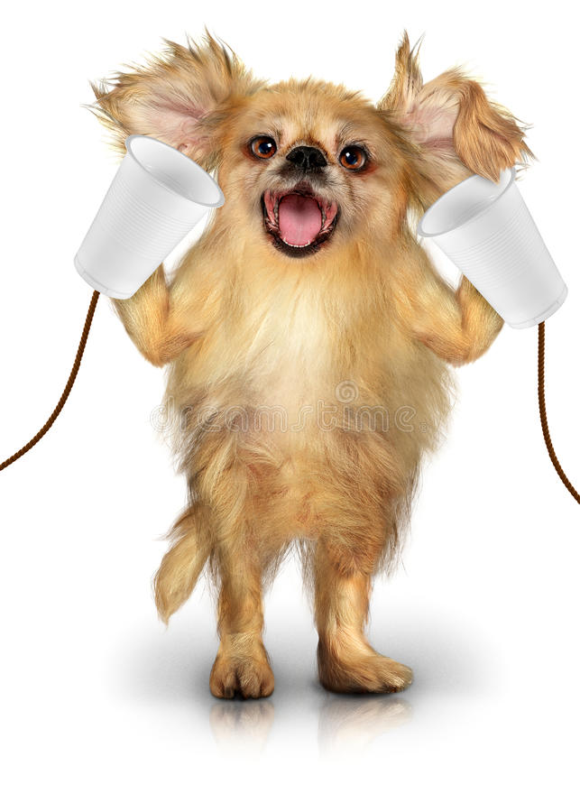 Dog with phone