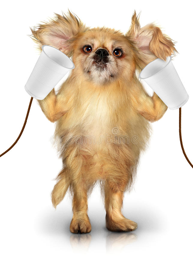 Download Dog with phone stock image. Image of call, communication - 34957585