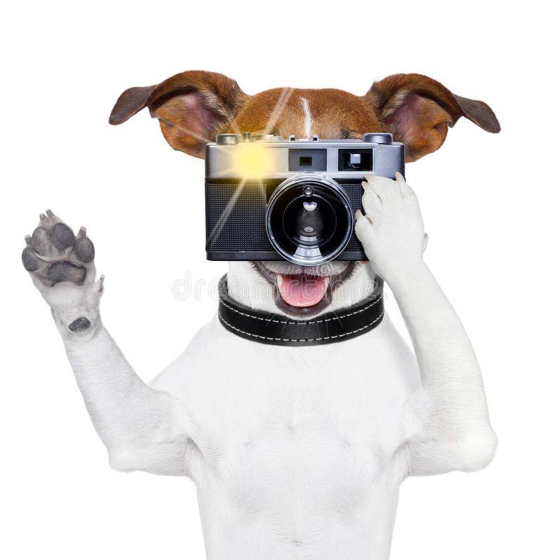 Dog photo. Dog taking a photo with an old camera and flashing stock images