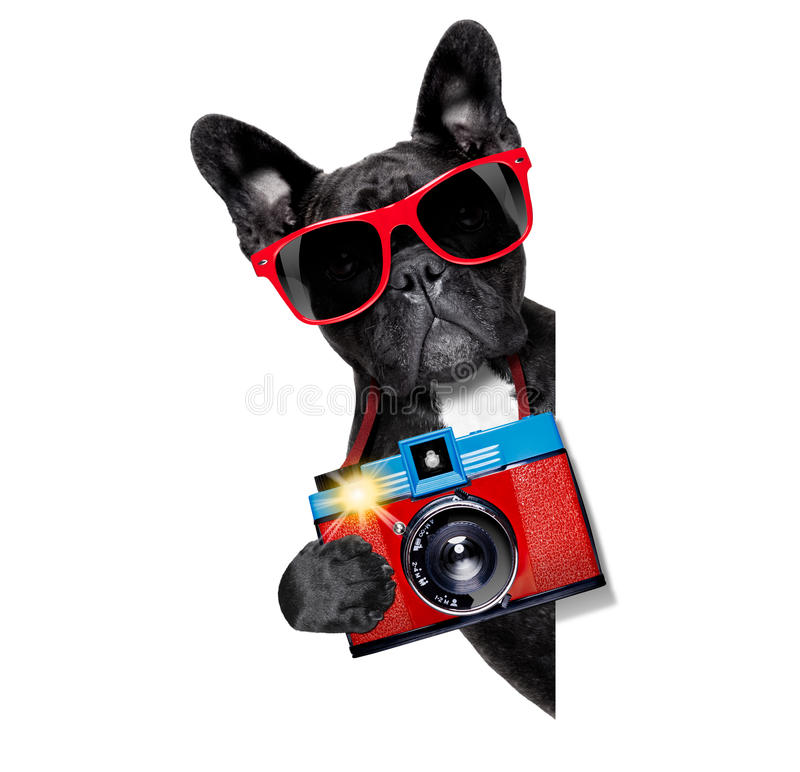 Dog photographer. Cool tourist photographer dog taking a snapshot or picture with a retro old camera stock image