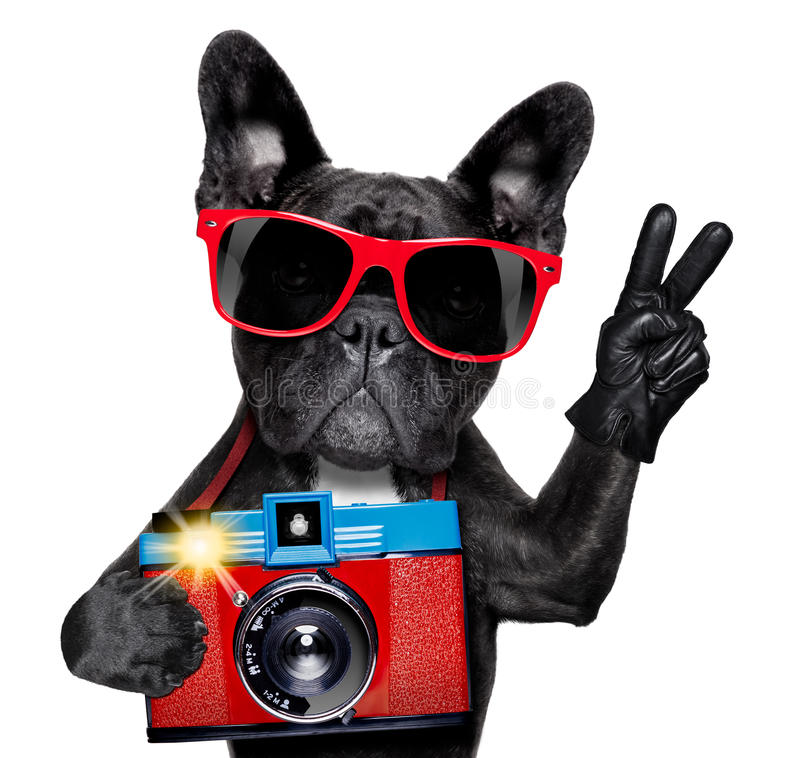 Dog photographer. Cool tourist photographer dog taking a snapshot or picture with a retro old camera royalty free stock photos