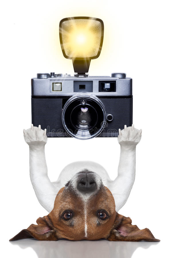 Dog photographer. Photographer dog taking a picture with a camera and flashing