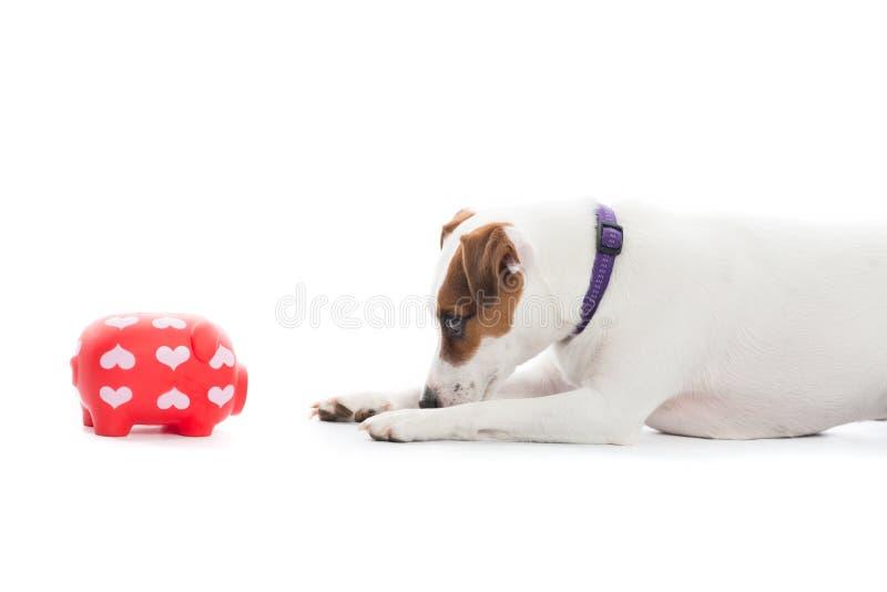 dog with piggybank royalty free stock photo