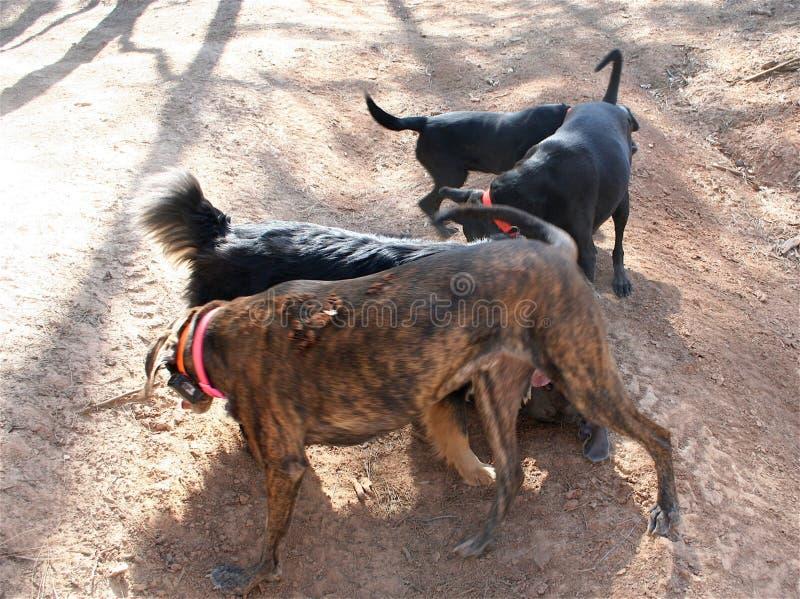 Dog Pile royalty free stock images