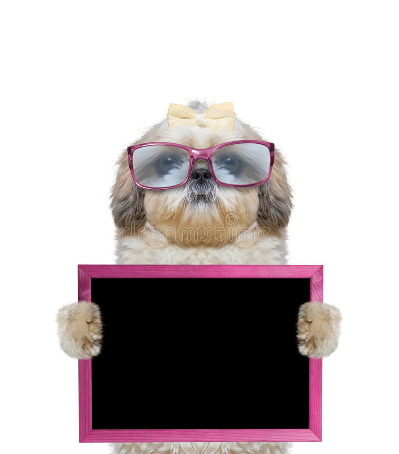 Dog in pink glasses keeps frame in its paws. The dog in pink glasses keeps frame in its paws stock photos