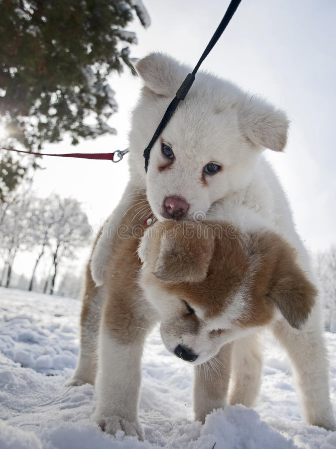 Download Dog play stock photo. Image of snow, mixed, learn, cold - 28987460