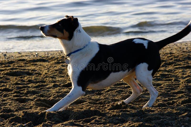 Dog play stock photos