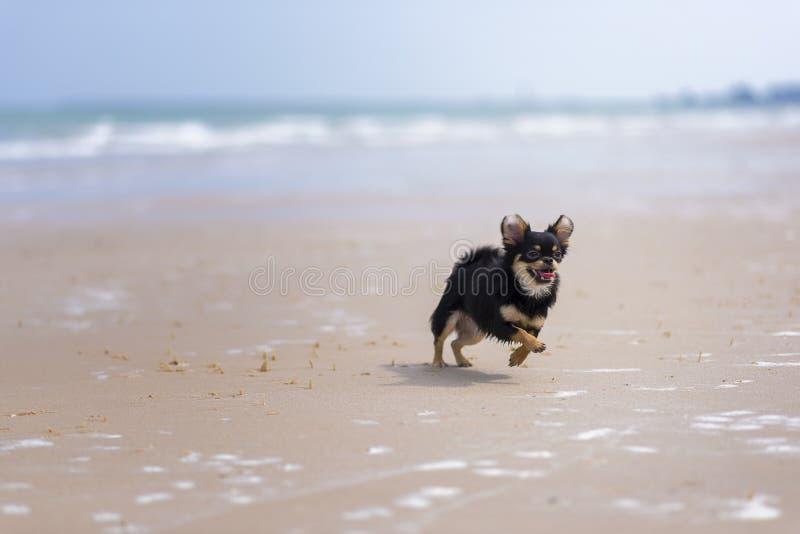 Download Dog Playing Stock Photos - Image: 31350593