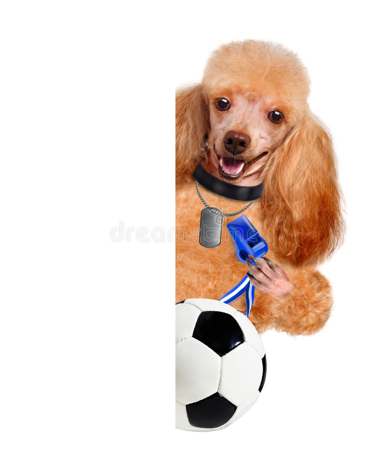 Dog playing football. The white banners royalty free stock photography