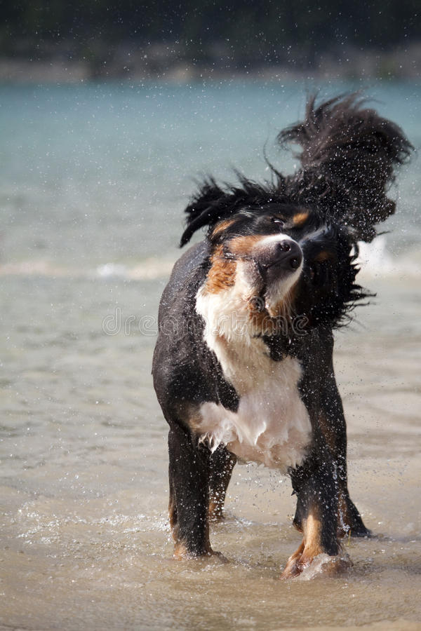 Free Dog Playing In Sea Royalty Free Stock Images - 29741729