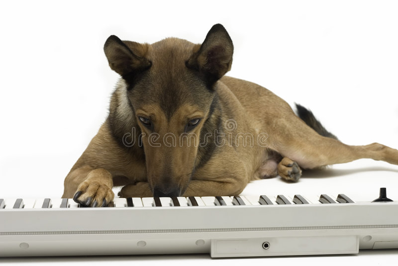 Dog playing music on keyboard stock image