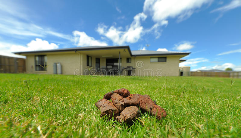 Dog poo in backyard stock photography