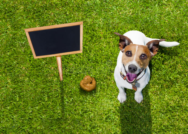 Dog poop on grass in park royalty free stock photos