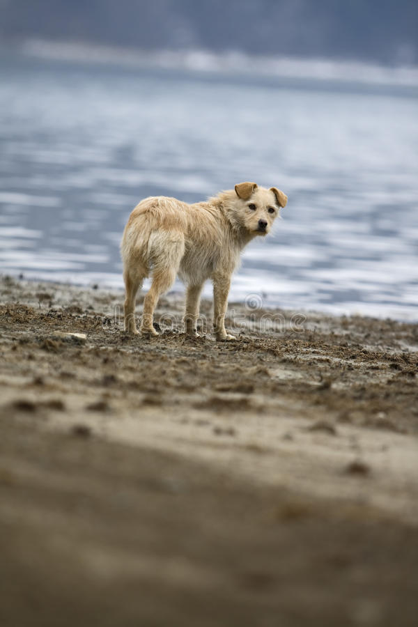 Download Dog portrait stock photo. Image of homless, blue, furry - 12054158
