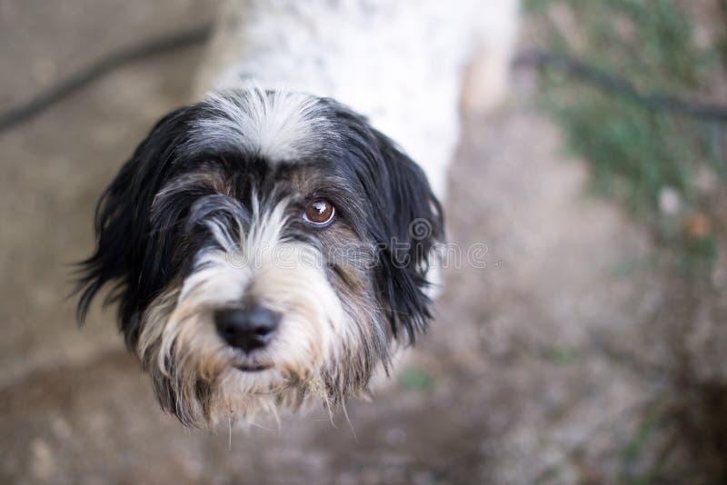 Dog portrait. Stray dog on a street royalty free stock image