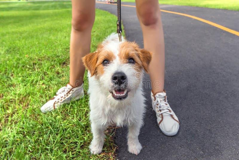 Dog posing on camera with woman legs stock photos