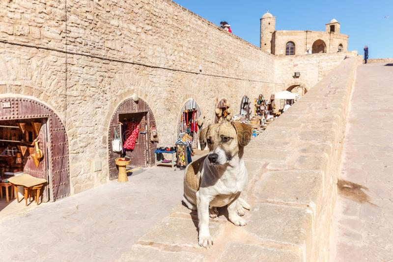 Dog on a wall at Essaouira Ramparts. Dog posing on a wall in front of some artisan shops at Essaouira Ramparts royalty free stock photo