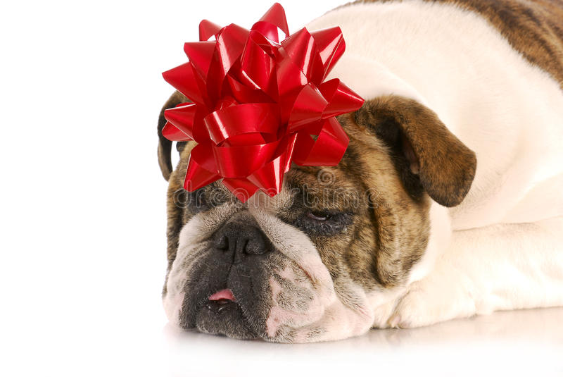 Download Dog Present Stock Image - Image: 21696701