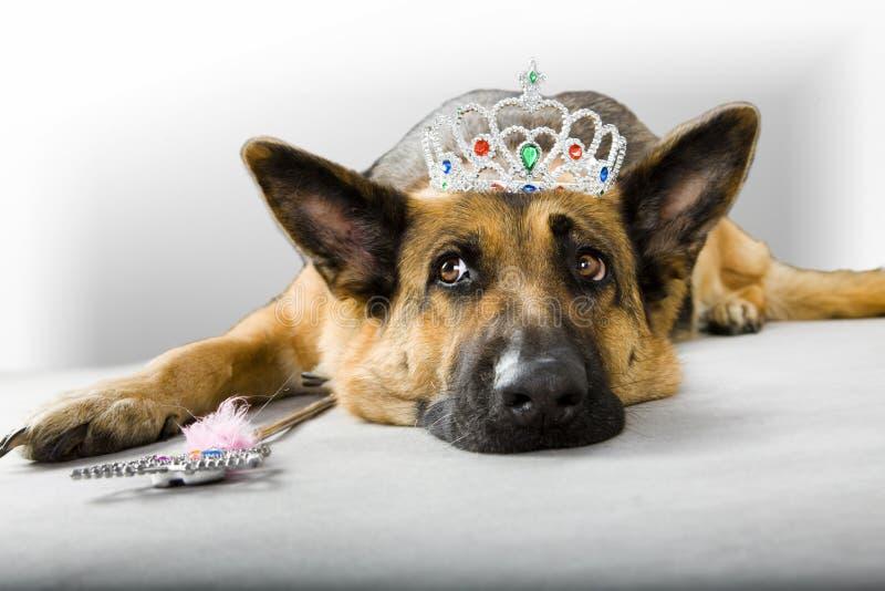 Dog Princess Fairy. Funny dog princess fairy wearing crown
