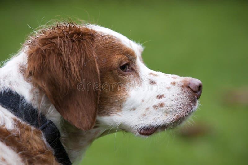 Dog profile stock images