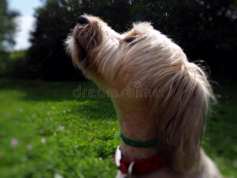 Dog profile royalty free stock images