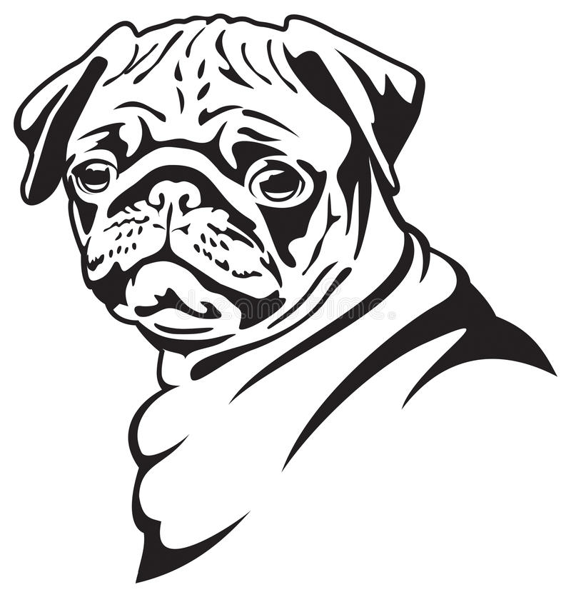 Dog. Pug. B & W vector drawing. Pug-dog