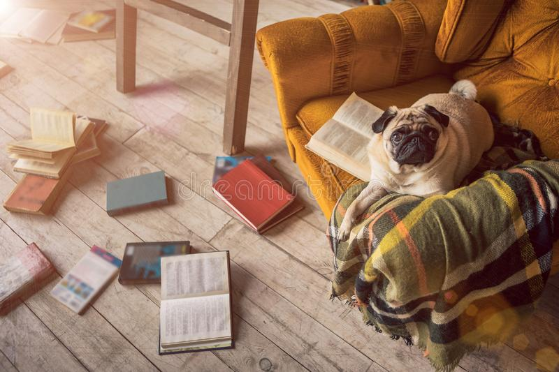 Smart dog in library stock images
