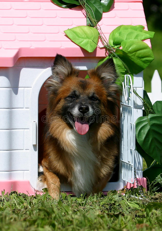 Download Dog in the puppet house stock image. Image of cute, friendship - 13373151