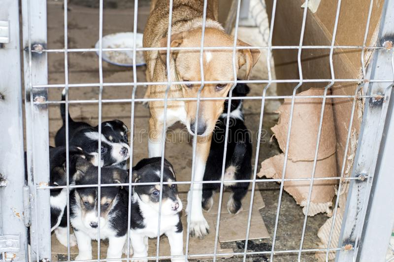 Dog with puppies behind bars house shelter stock photos