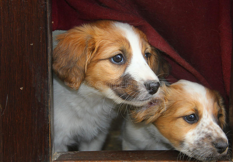 Dog puppies coming our from their dog's bed royalty free stock photo