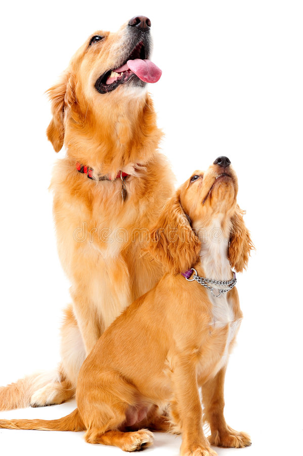 Download Dog And Puppy Royalty Free Stock Photo - Image: 4514715