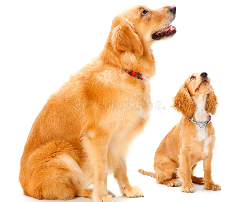 Dog and Puppy stock image