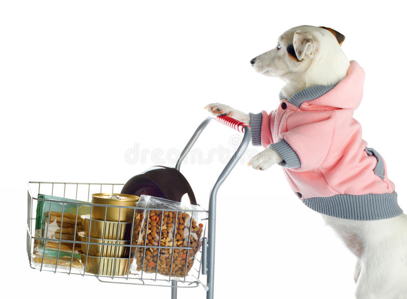 Dog pushing a shopping cart full of food. Jack Russell dog pushing a shopping cart full of food on white background royalty free stock photo