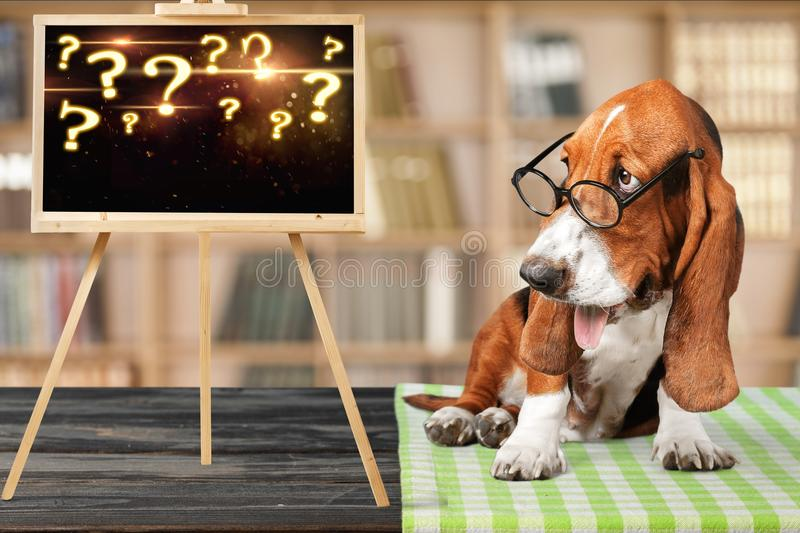 Download Dog stock image. Image of confused, funny, imputable - 111033407