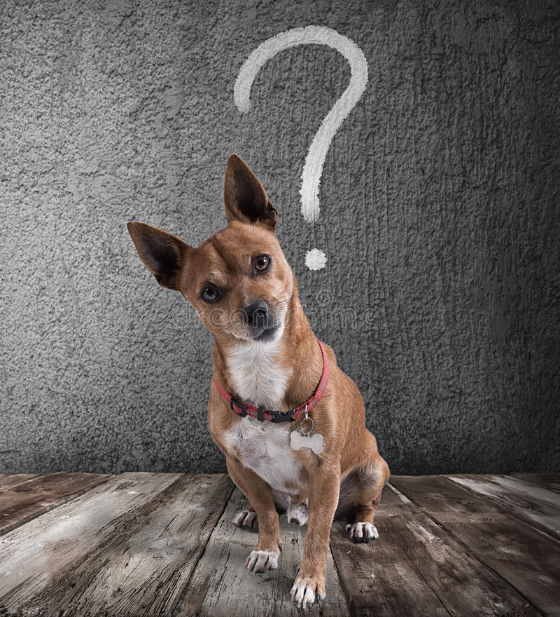 Dog with quizzical expression stock photos