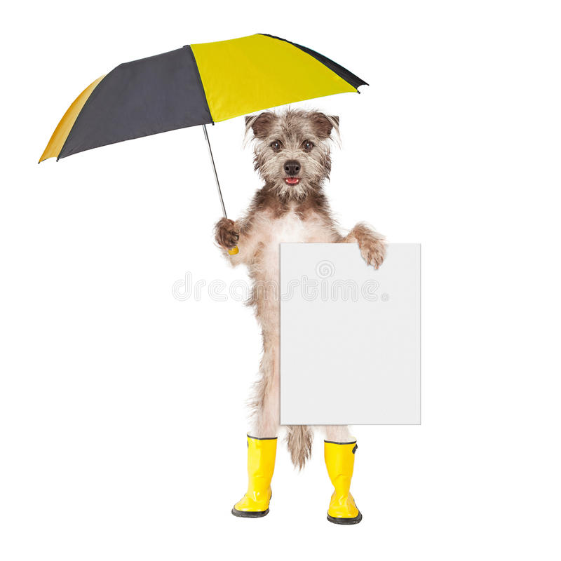 Dog With Rain Umbrella and Sign. Cute terrier dog wearing yellow rain boots holding umbrella and blank sign stock photography