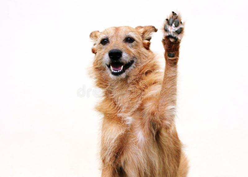 Dog with raised paw stock photo