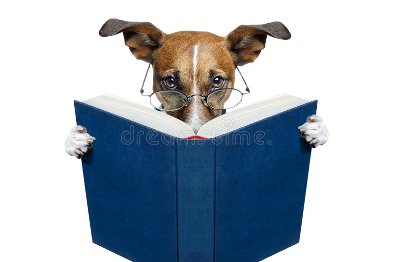 Dog reading a book. A dog reading a blue book novel