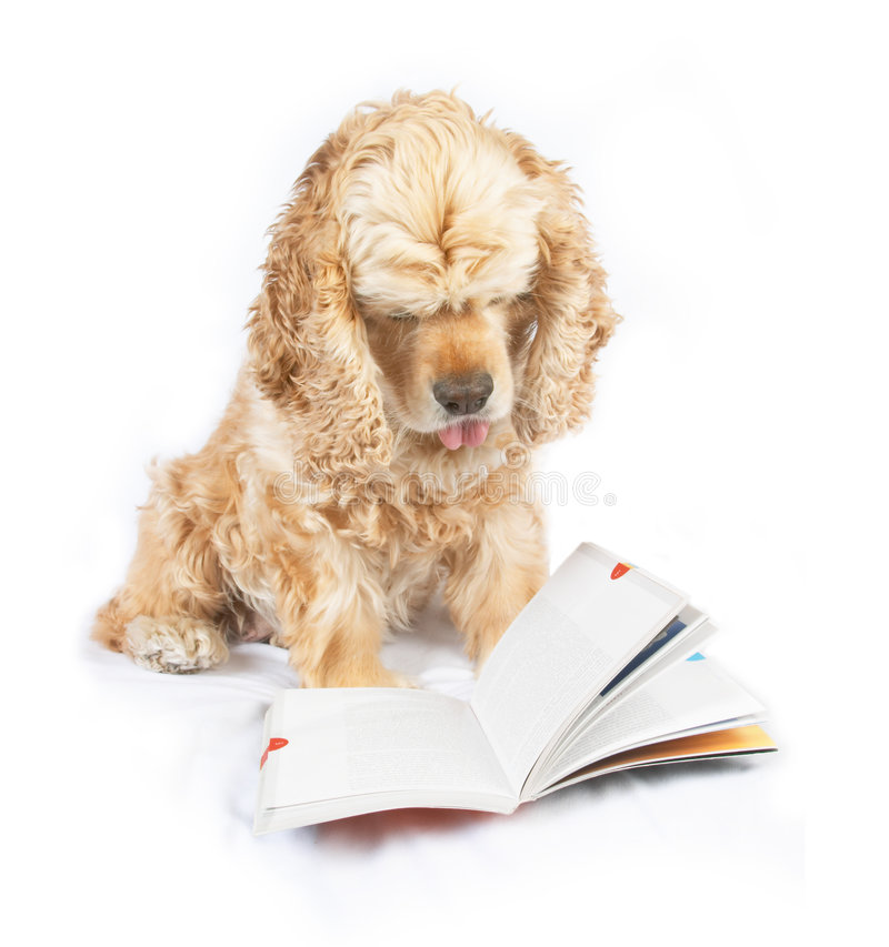 Dog reading book, with the tip of tongue out royalty free stock images